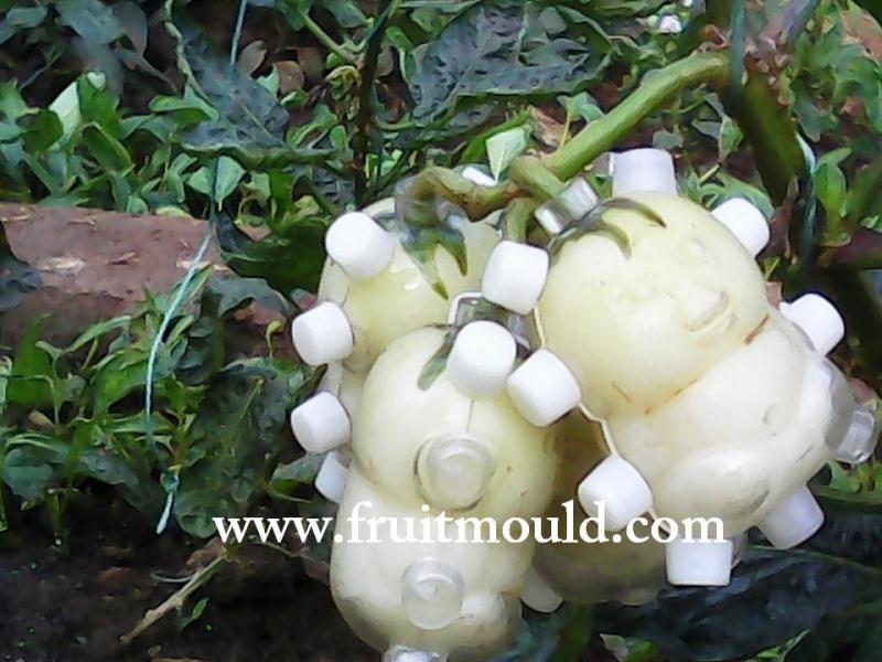 Weird Fruits That Grow On Trees 4