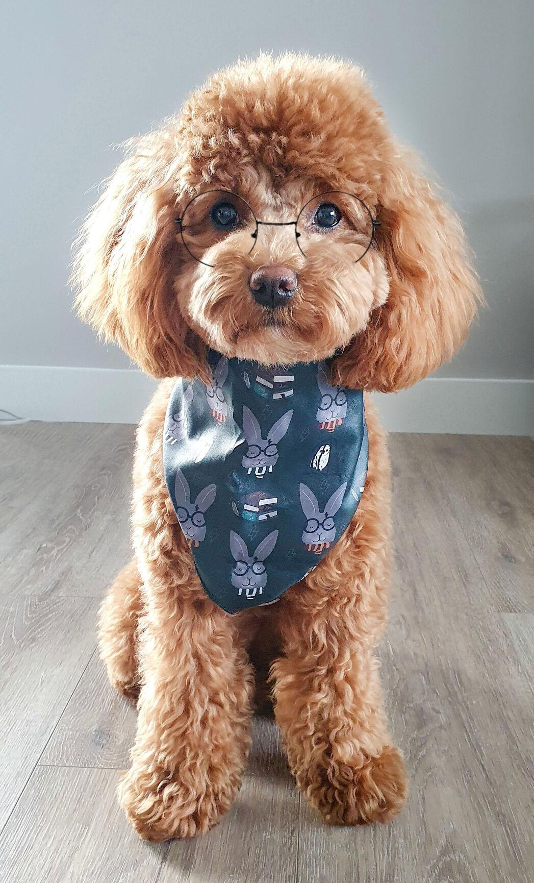 Teal Tornado Dog Harness