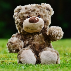 Warm-up Brown Bear