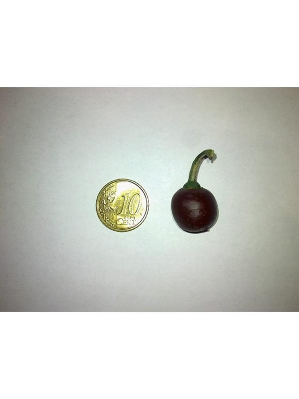 10 Semi/Seeds Rocoto Mini Brown  (Mini Rocoto Brown)