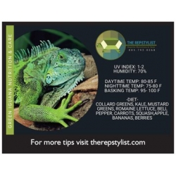 Green Iguana Care Magnet