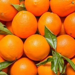 Marmalade oranges (1kg)