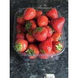 New season Strawberries