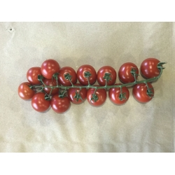 Tomatoes Cherry Vine per strip