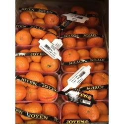 Satumas orange punnet