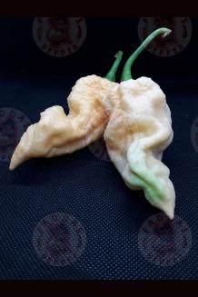 Ghost Yaki Peach FP (f4)