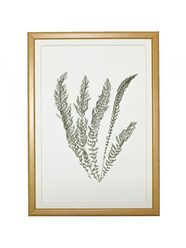 Herbarium ANDIN 21x29 cm