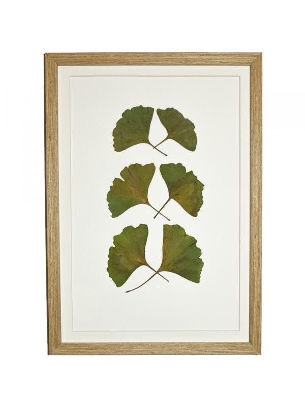 Herbarium BLORA 21x29 cm