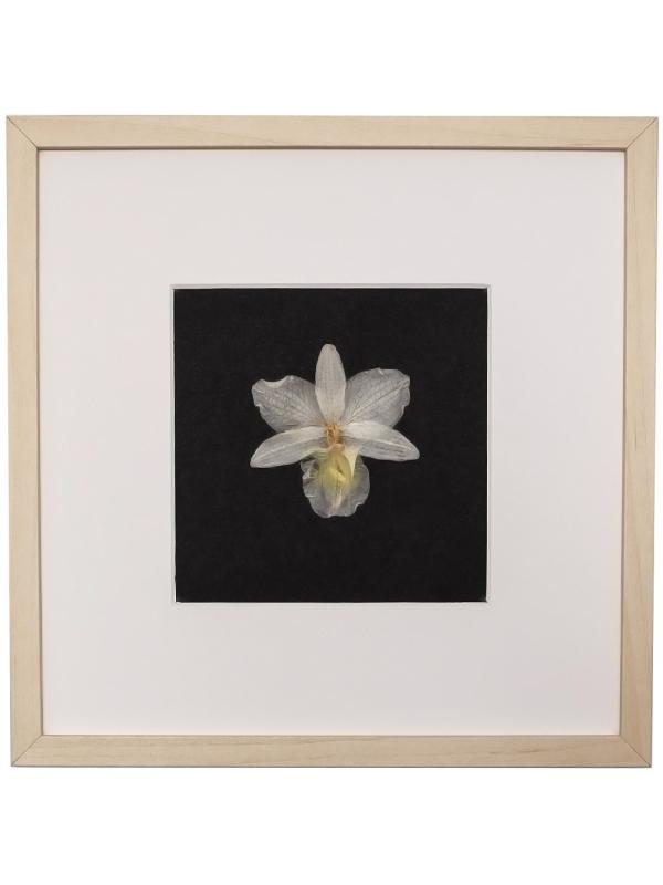 Herbarium EIGE 23x23cm