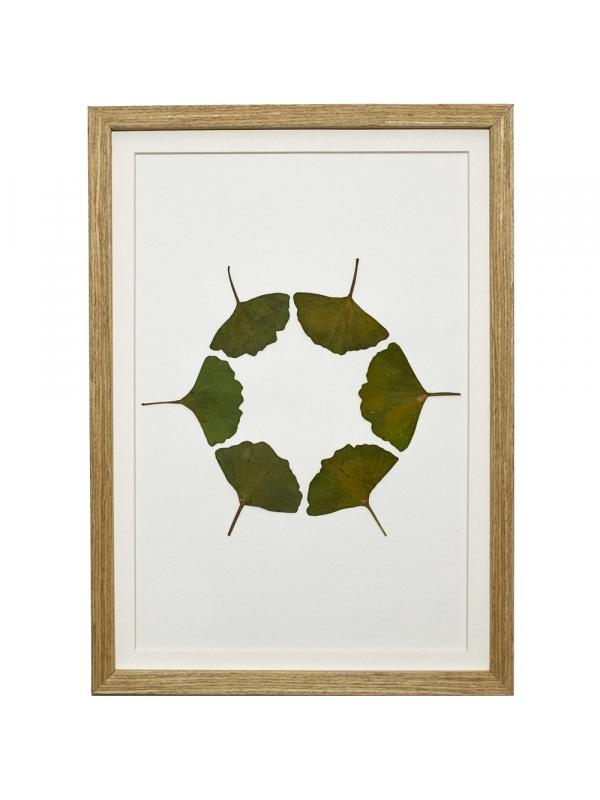Herbarium JAMBI 21x29 cm