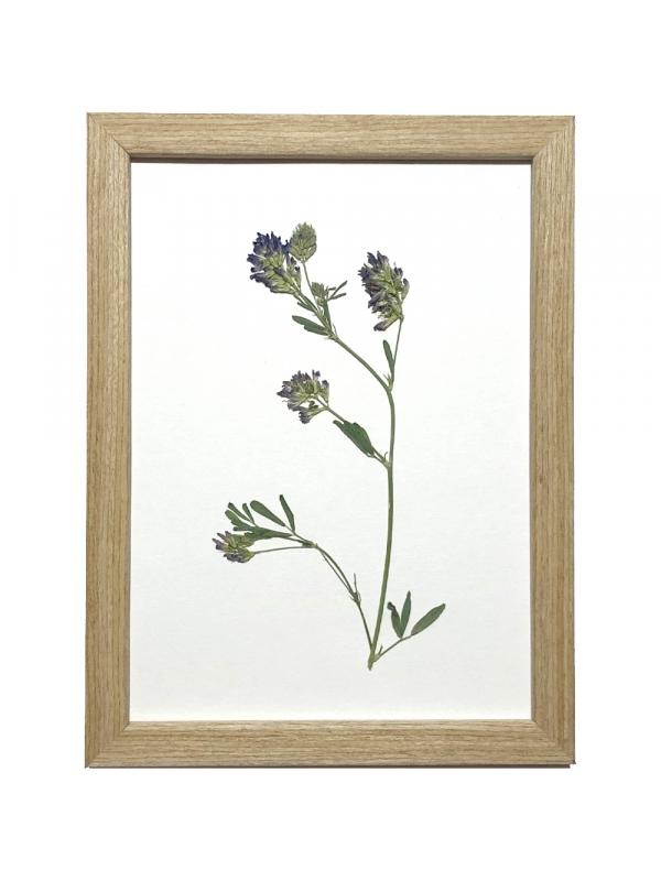 Herbarium NANAIMO 13x18 cm