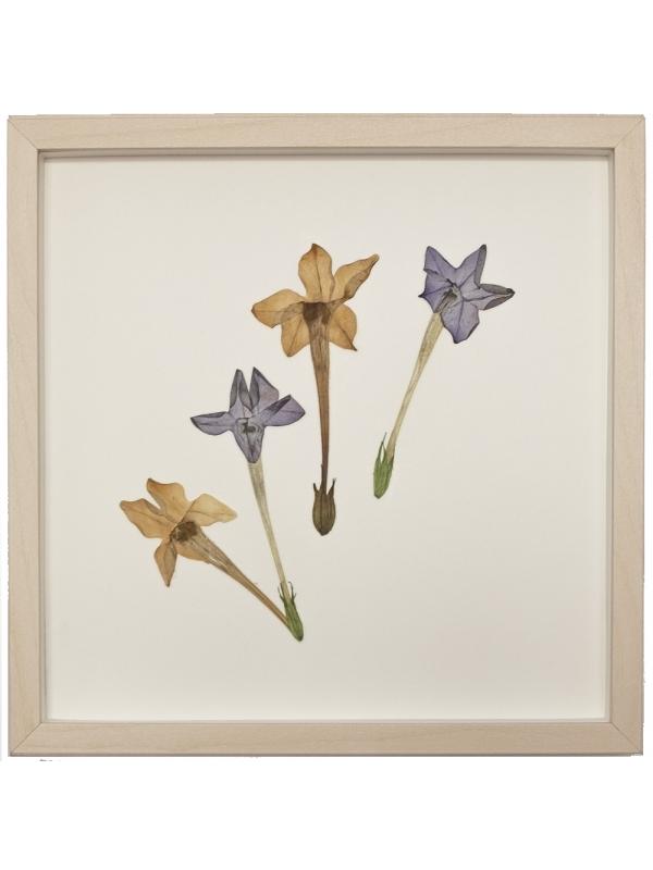 Herbarium OGRA 23x23cm