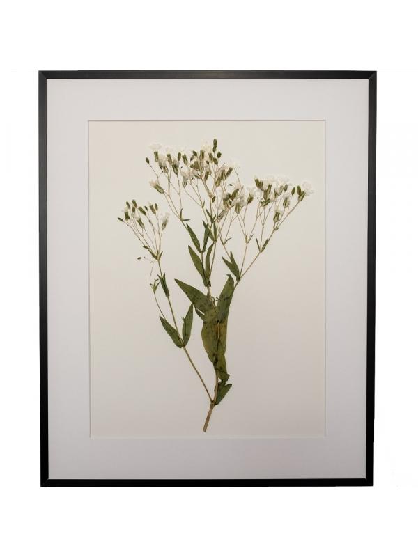 Herbarium ONIS 40x50cm