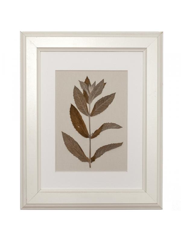 Herbarium TUAPSE 21x29 cm
