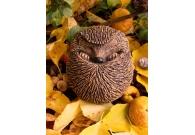 Adult Hedgehog - Handmade in stoneware..