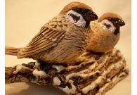 Tree Sparrows on a snow covered log - ..